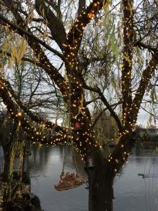 Blessington Street Basin winter fairy tree
